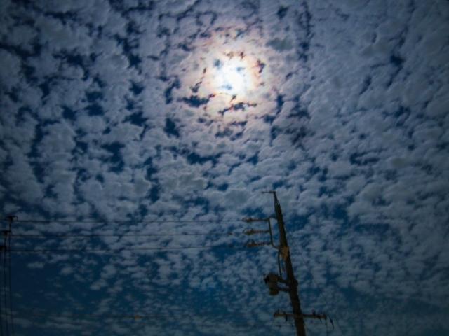夜空に舞うコウモリ